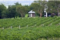 Winery South Burnett near Kingaroy